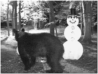 The bear stops by to say hello to old friends. Thank you to Barbara Finch for submitting this picture. 8-12-08
