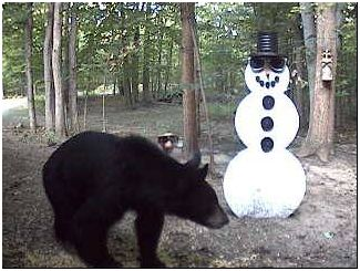 Black bear stops by on August 24th, 2008. Picture submitted by Richard Guccini from Royal Oak, MI.