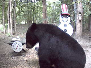 The same bear returned in the morning. July 10, 2008