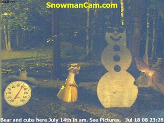 Whitetail buck, in velvet, comes back at night to visit the Snowman.  Click picture to view the larger version.