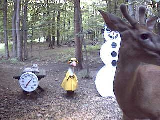Whitetail buck in velvet visits the Snowman Cam on July 18th at 8:43 pm.