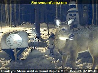 White tail doe visits the snowman cam.