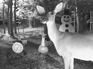 Nice shot of a doe looking directly into the camera. Sent in by Richard Guccini of Royal Oak, MI 6-26-08