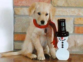 Future Leader Dog, Rhoades with Snowman. Thank you Sam & Judy Brankel, of Clare MIchigan, for sending us this picture.
